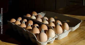 pastured eggs, planck, author real food